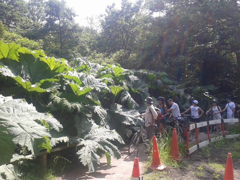 The Gunaras on our walk through Woodland Gardens are positively Jurassic after all this warm weather!