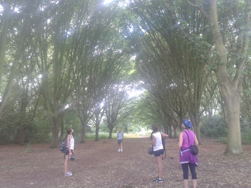 These Cathedral Trees in the Waterhouse Plantation in Bushy Park are stunning!