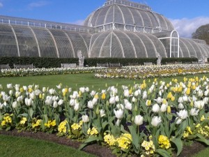 April is tulip time at Kew Gardens!